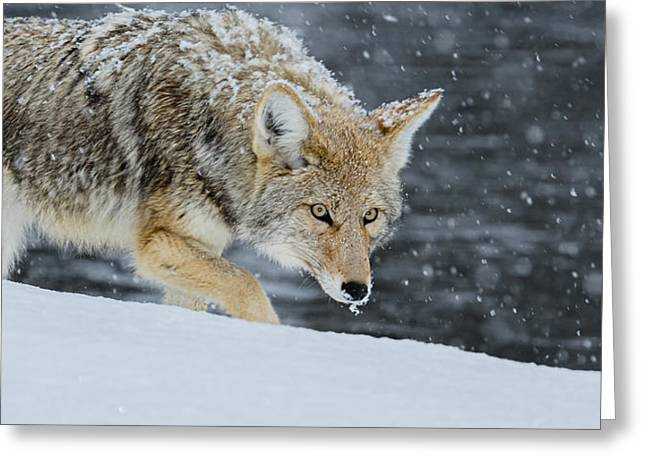 Intensity Greeting Card by Yeates Photography