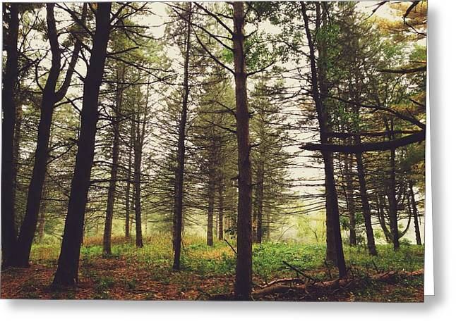 Greeting Card featuring the photograph Into The Forest by Nikki McInnes
