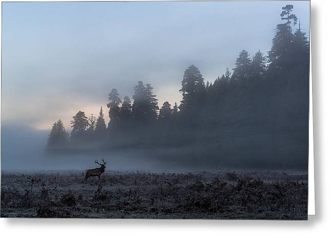 Into The Mist Greeting Card by Scott Warner