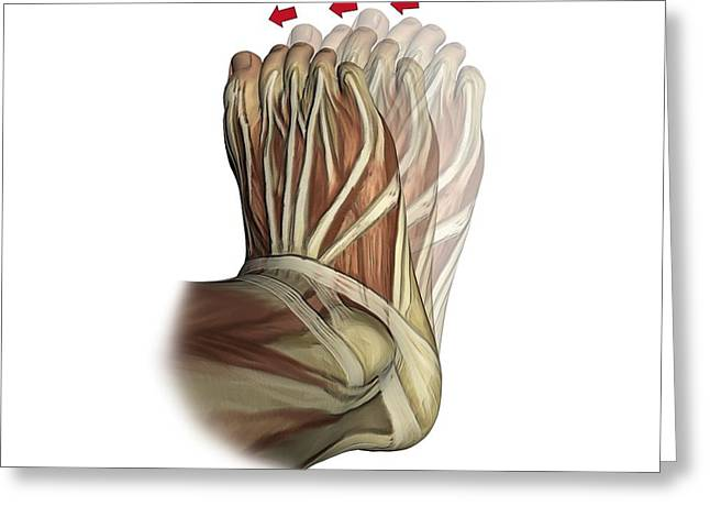 Inversion Of The Foot, Artwork Greeting Card