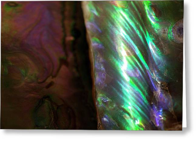Iridescent Baculites Fossil Shell Usa Greeting Card by Paul D Stewart