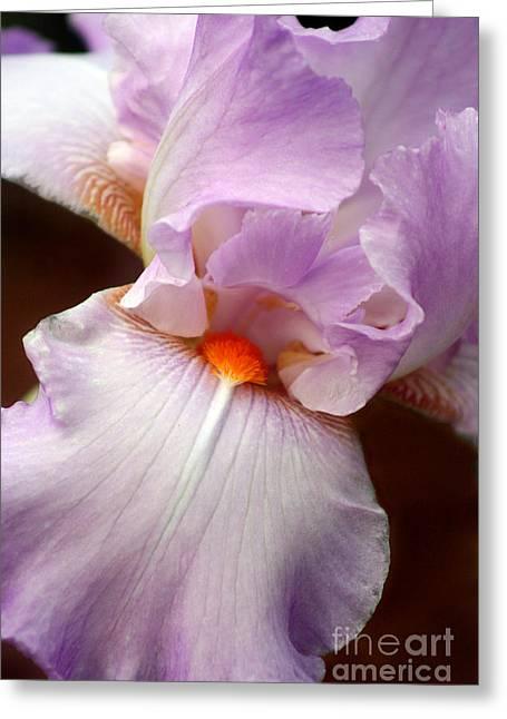 Iris Greeting Card by Karen Adams
