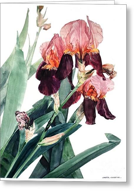Watercolor Of A Pink And Maroon Tall Bearded Iris I Call Iris La Forza Del Destino Greeting Card