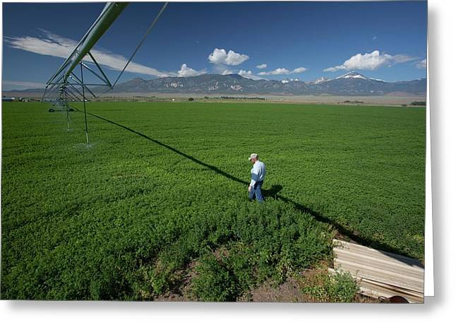 Irrigation Boom And Farmer With Alfalfa Greeting Card