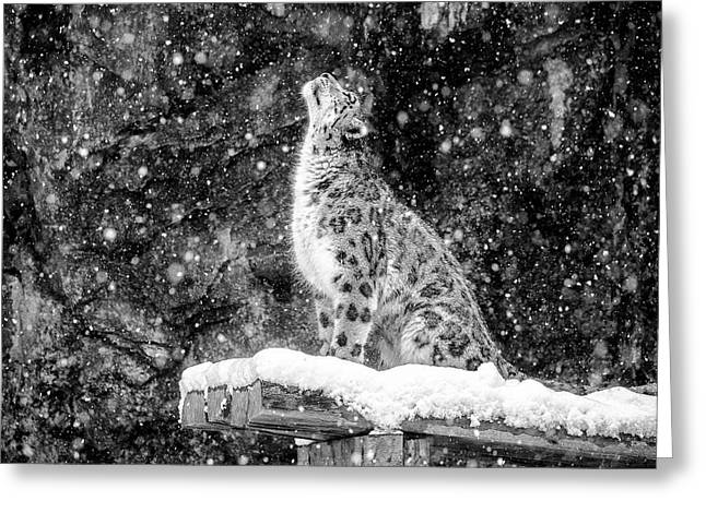 It's Snowing Greeting Card