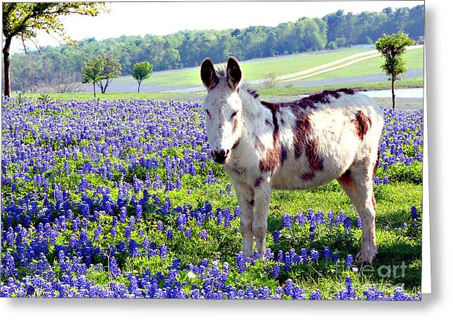 Jesus Donkey In Bluebonnets Greeting Card
