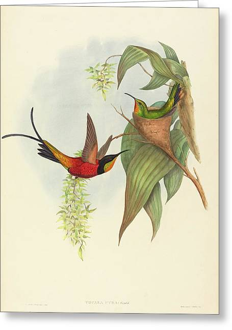 John Gould And H.c. Richter British Greeting Card