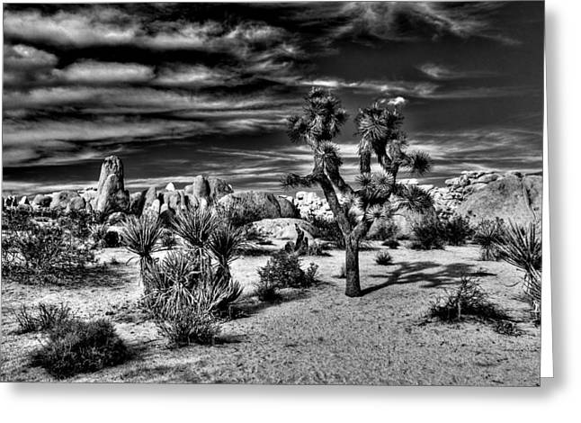 Greeting Card featuring the photograph Joshua Tree Black And White by Benjamin Yeager