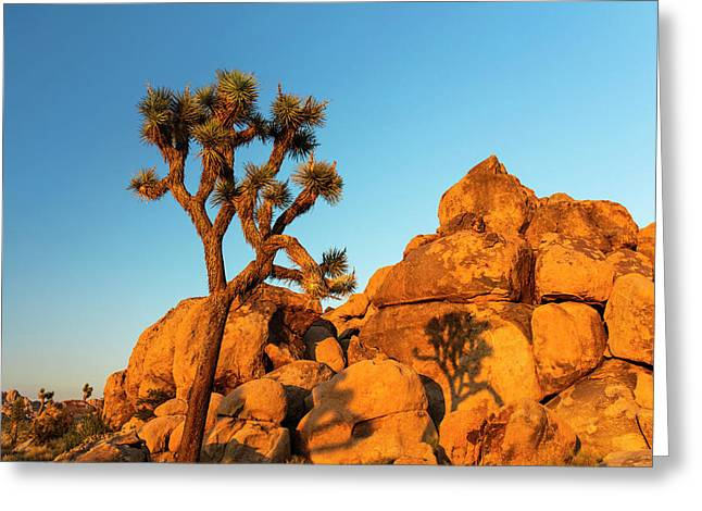 Joshua Tree (yucca Brevifolia) Greeting Card by Michael Szoenyi