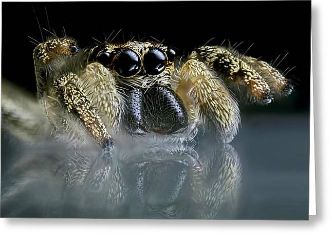 Jumping Spider Greeting Card by Frank Fox