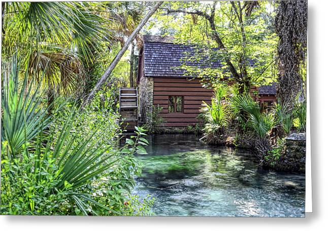 Juniper Springs Greeting Card by Bob Jackson