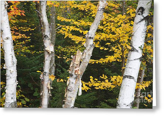 Kancamagus Highway - White Mountains New Hampshire Greeting Card