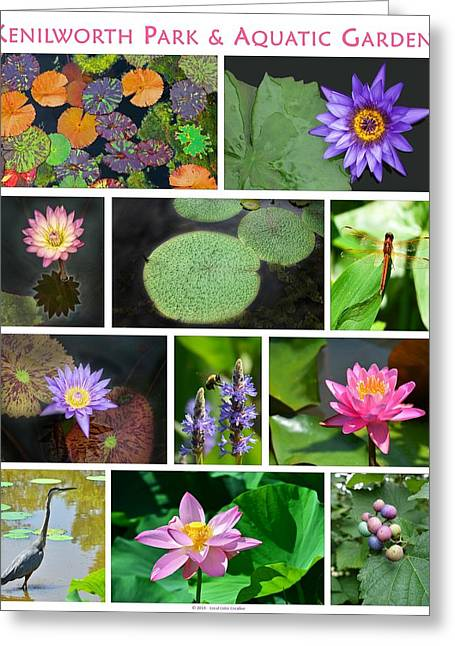 Kenilworth Aquatic Gardens Greeting Card