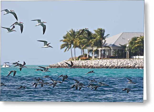 Key West Greeting Card by Steven Lapkin