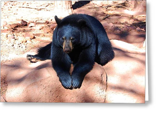 Bear Lounge Greeting Card by Miles Stites