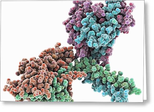 Kinesin Motor Protein Dimer Greeting Card by Laguna Design