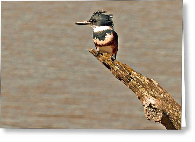 King Fisher  Greeting Card by Davids Digits