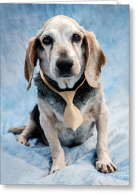 Kippy Beagle Senior Greeting Card