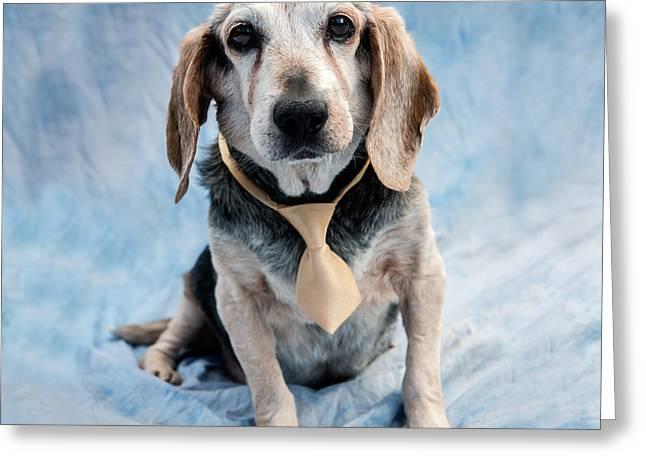 Kippy Beagle Senior And Best Dog Ever Greeting Card