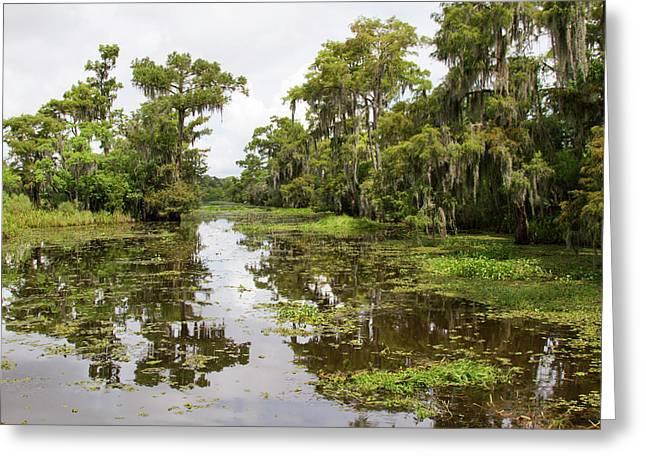 La, Lafitte, Airboat Swamp Tour Greeting Card