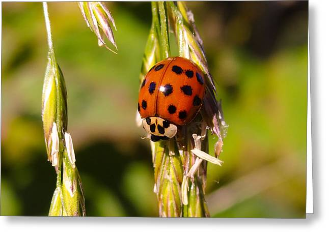 Greeting Card featuring the tapestry - textile Lady Bug by Dennis Bucklin