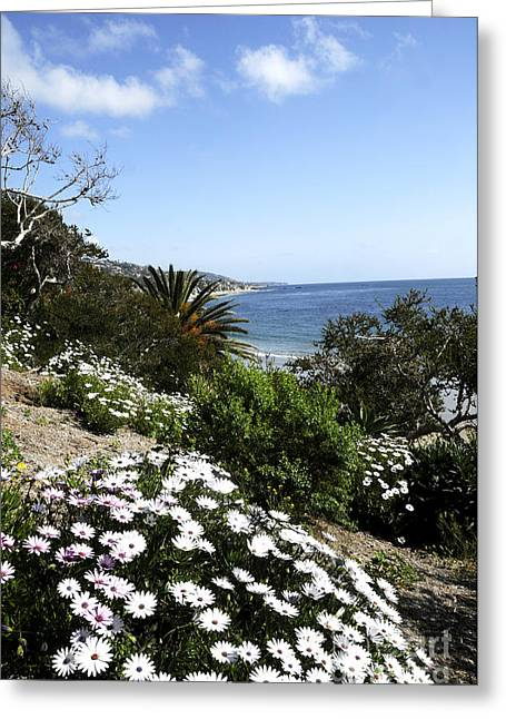 Laguna Beach  Greeting Card by Timothy OLeary