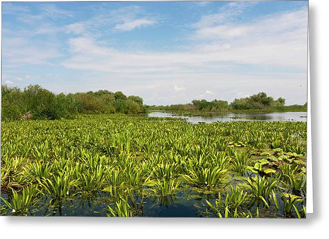 Lake In The Danube Delta, Romania Greeting Card