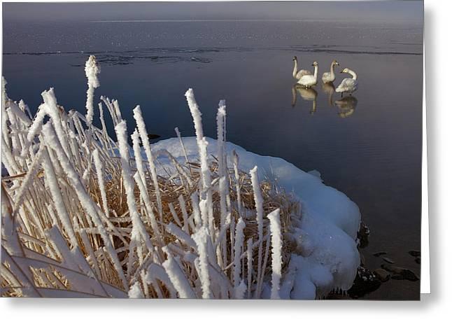 Lake Kussharo Greeting Card by Lucas Vallecillos- Vwpics