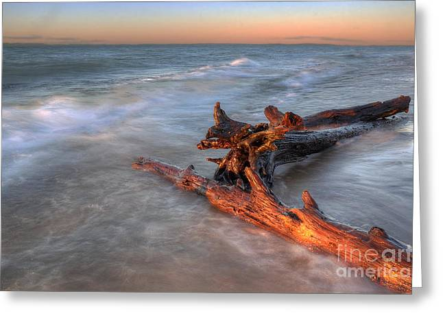Lake Superior Driftwood Greeting Card by Twenty Two North Photography