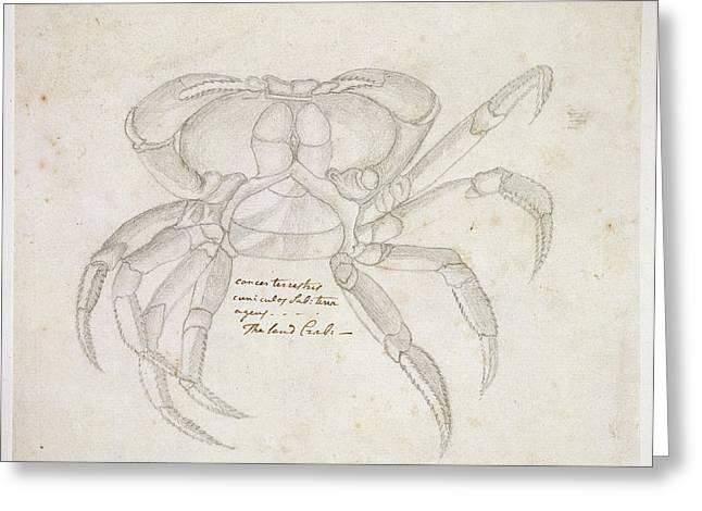 Land Crab Greeting Card by Natural History Museum, London