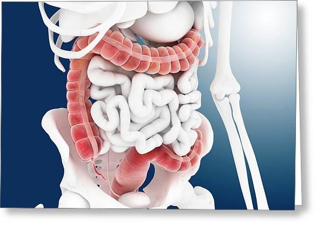 Large Intestine Greeting Card by Springer Medizin