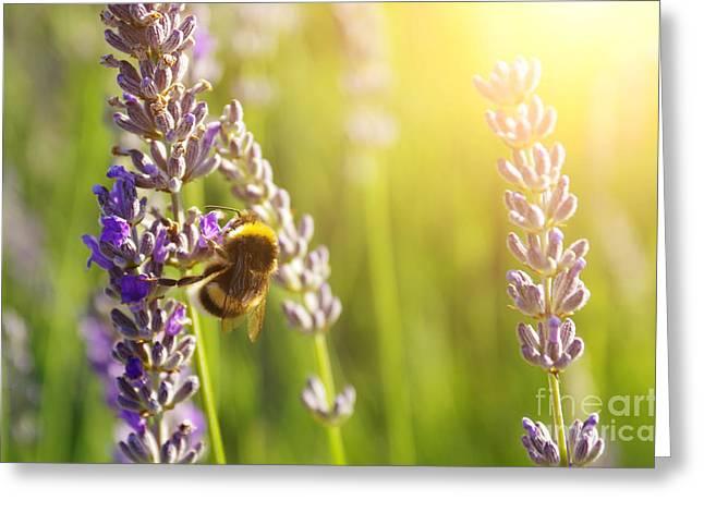 Lavender Flowers Greeting Card by Carlos Caetano