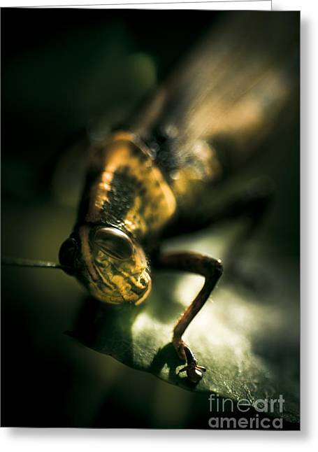 Leaf Bites Greeting Card by Jorgo Photography - Wall Art Gallery