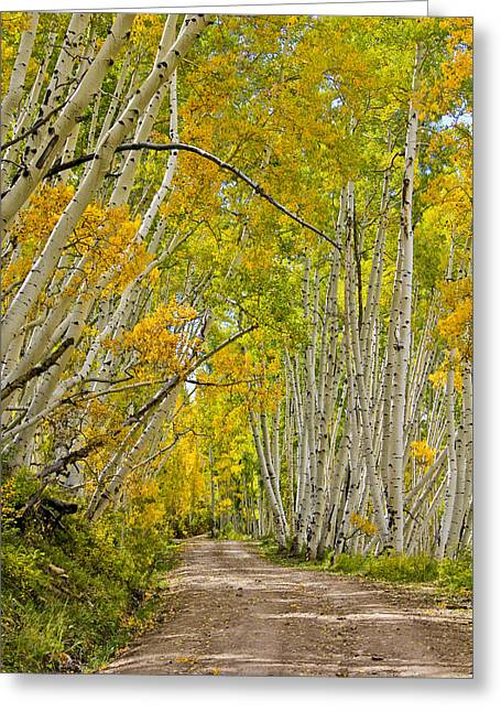 Leaning Aspens Greeting Card by Marta Alfred
