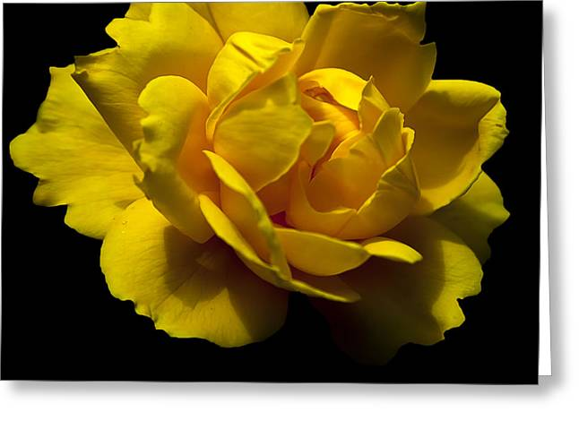 Greeting Card featuring the photograph Lemon Rose by David Millenheft
