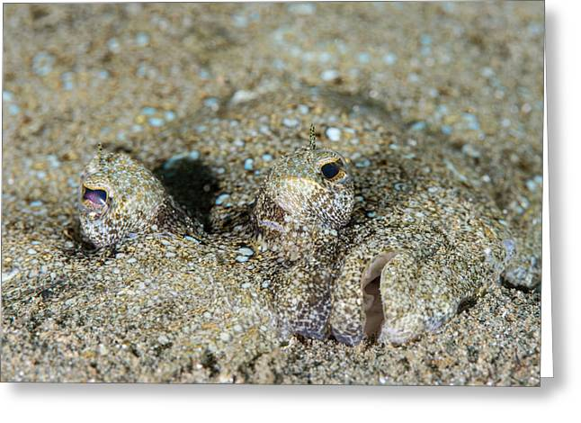 Leopard Flounder Greeting Card by Andrew J. Martinez