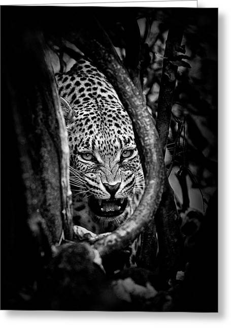 'leopard's Lair' Greeting Card