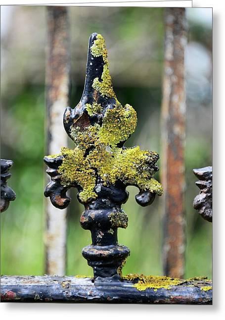 Lichen On Iron Railings In Clean Air Greeting Card