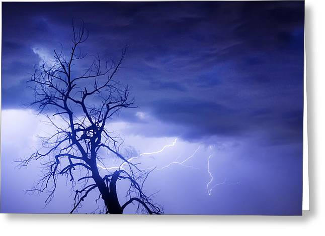 Lightning Tree Silhouette 29 Greeting Card