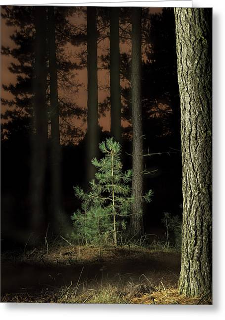 Lightpainting The Pine Forest New Growth Greeting Card