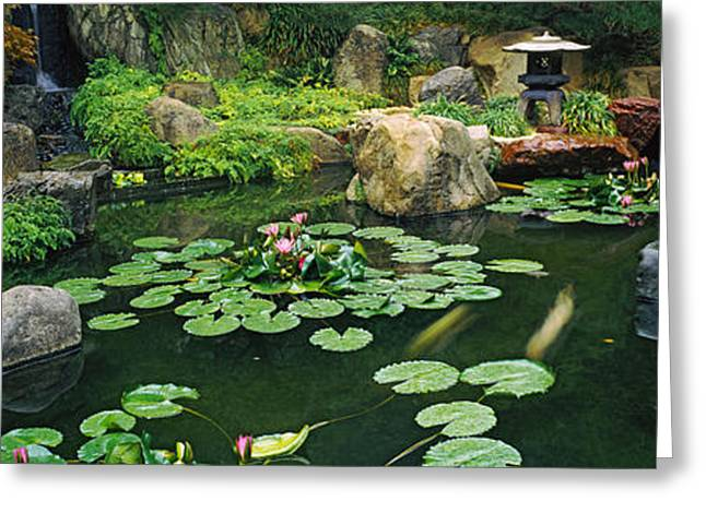 Lilies In A Pond At Japanese Garden Greeting Card by Panoramic Images