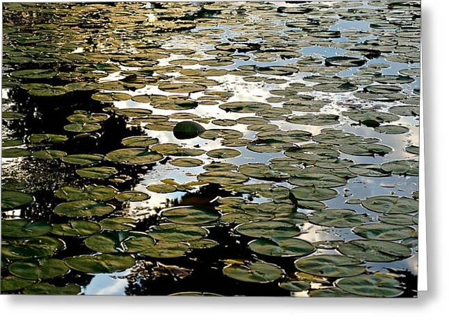 Lilly Pad Abstraction Greeting Card