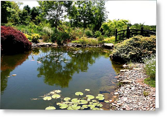 Lily Pond At Paxson Hill Greeting Card by Addie Hocynec