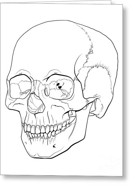 Line Illustration Of A Human Skull Greeting Card