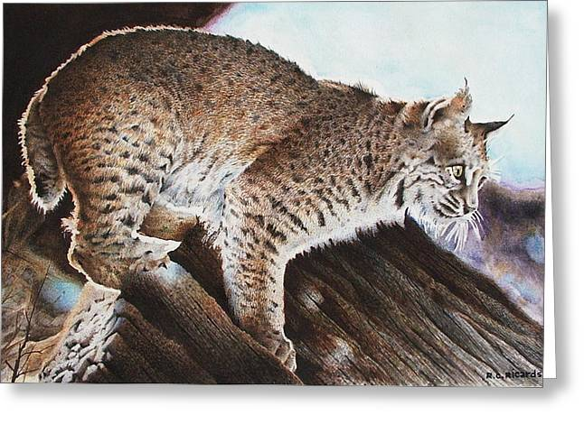 Linns Valley Bobcat Greeting Card by Ric Ricards
