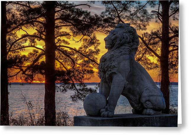 Lion At Sunset Greeting Card by Jerry Gammon