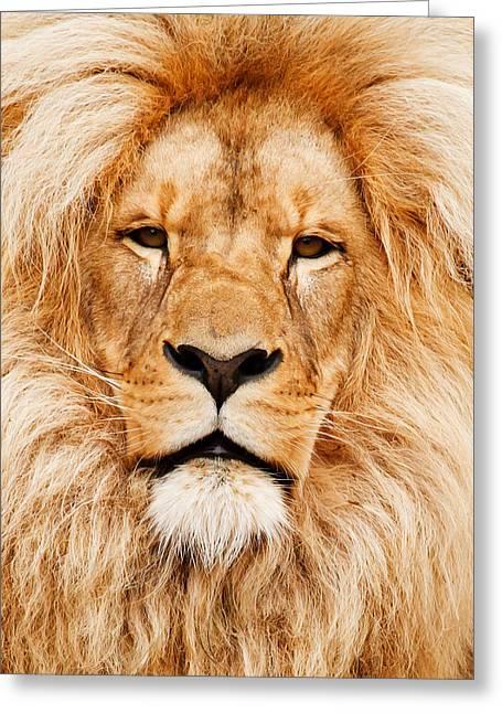Lion Portrait Greeting Card by Tilen Hrovatic