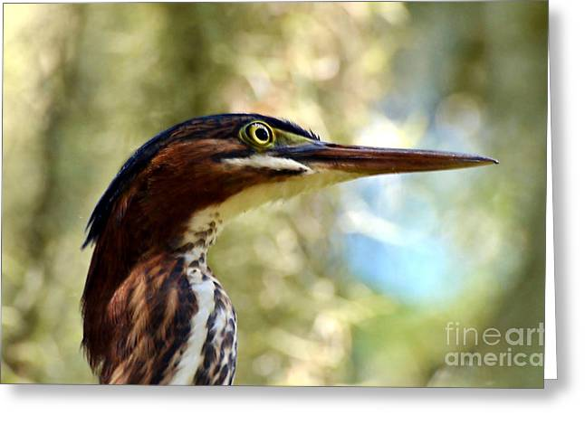 Greeting Card featuring the photograph Little Green Heron Portrait by Kathy Baccari
