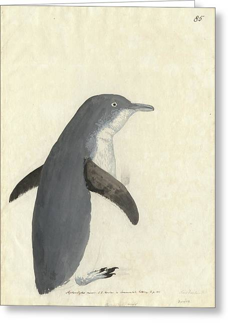 Little Penguin Greeting Card by Natural History Museum, London
