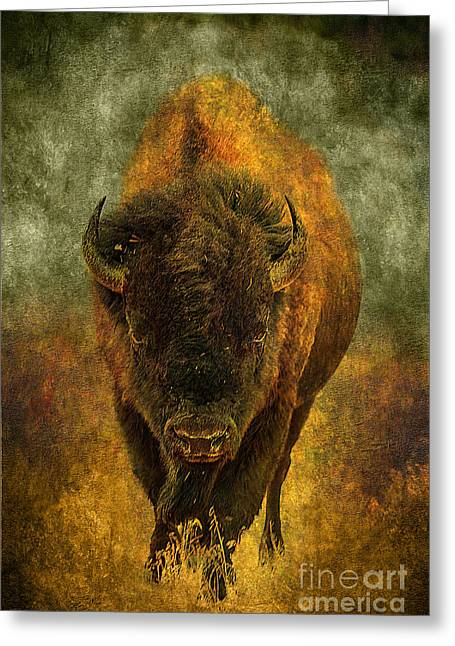 Lone Buffalo Greeting Card